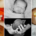 Baby Daisy :: Pittsburgh Newborn Photographer