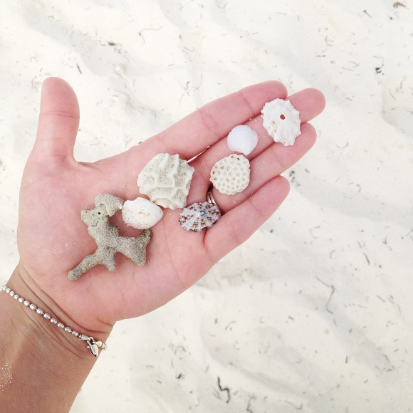 Lilly's little shell collection.