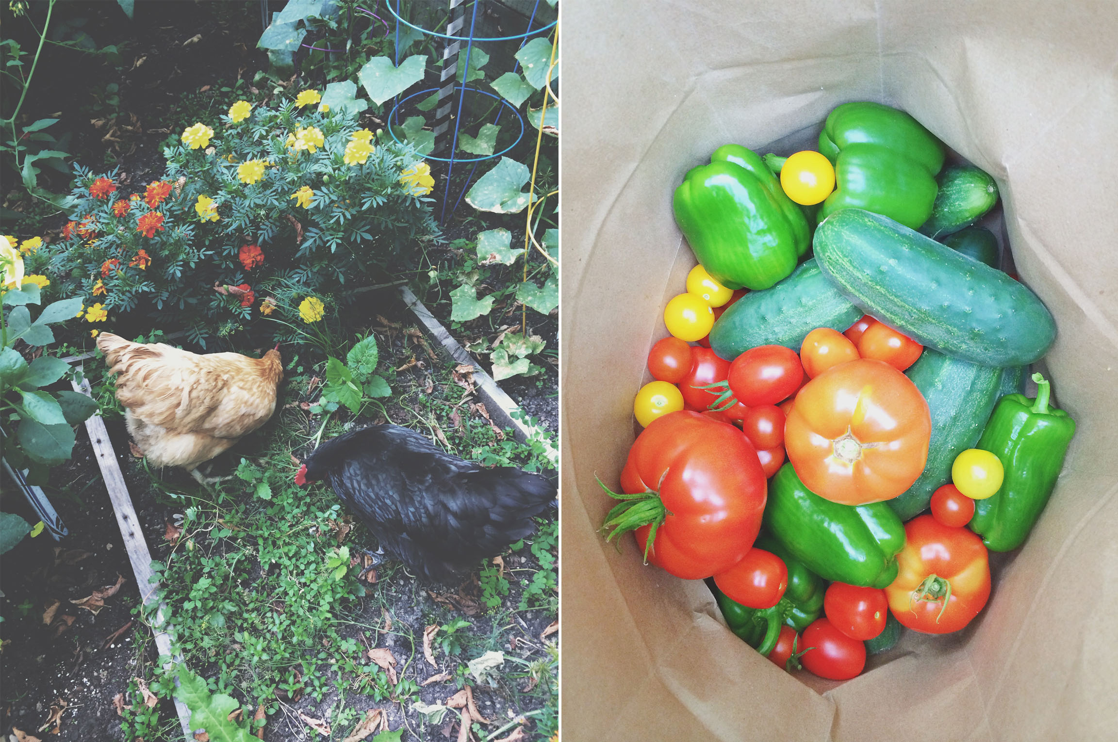 Chickens, Hawks, Snakes, and the Really Bad Day