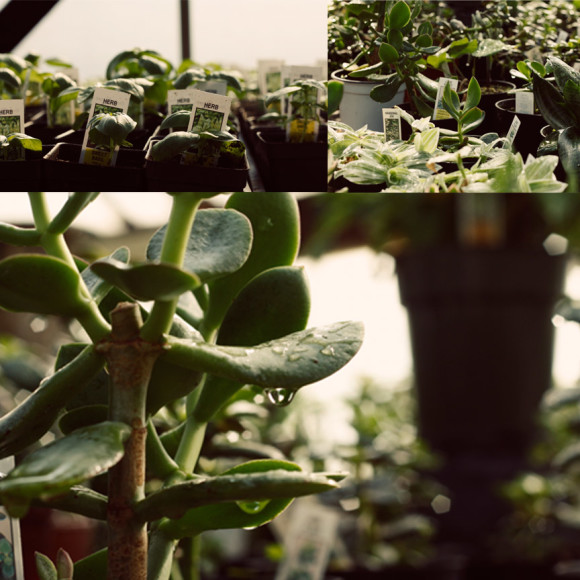 garden post 4