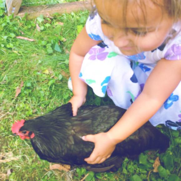 Chickens Round 2 011