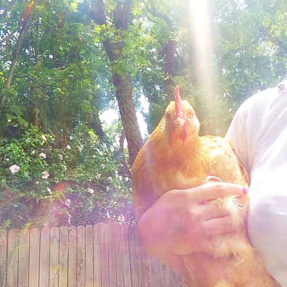Chickens Round 2 012