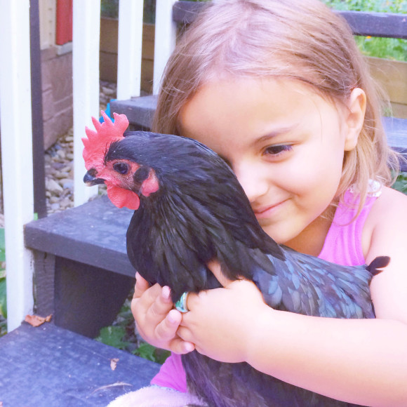 Chickens Round 2 028