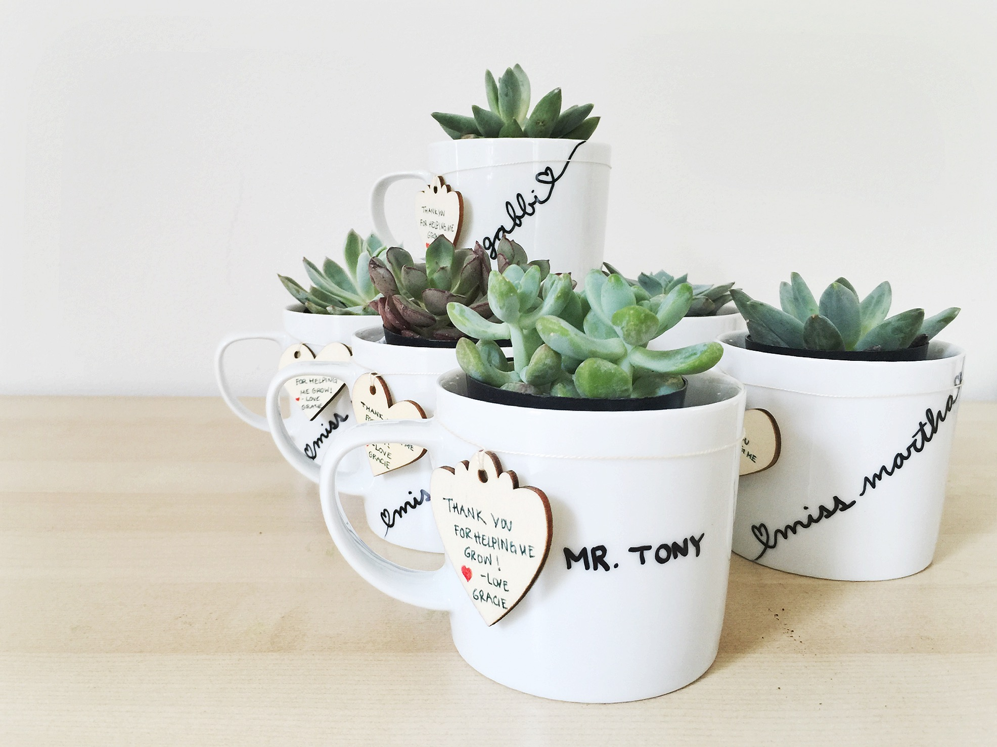 DIY Potted Succulents in Coffee Mugs