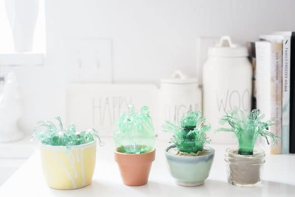 Succulent art: upcycling plastic bottles